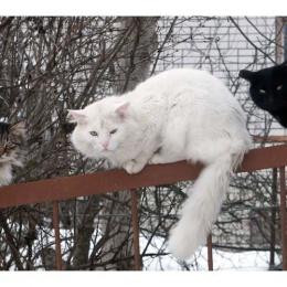 cats01-dd4ddc63b3