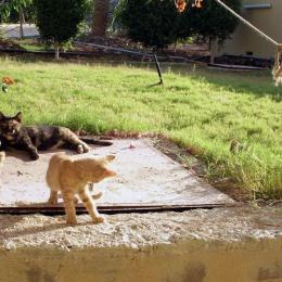 cats2-e0958c13d5