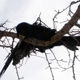 crow01-e2c67c181f