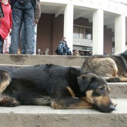 dogs-e0958c13d5