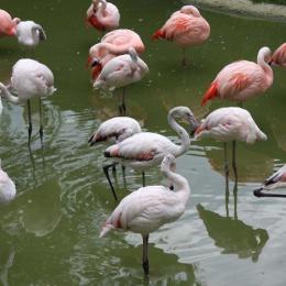 flamingo-ae6e7f956e